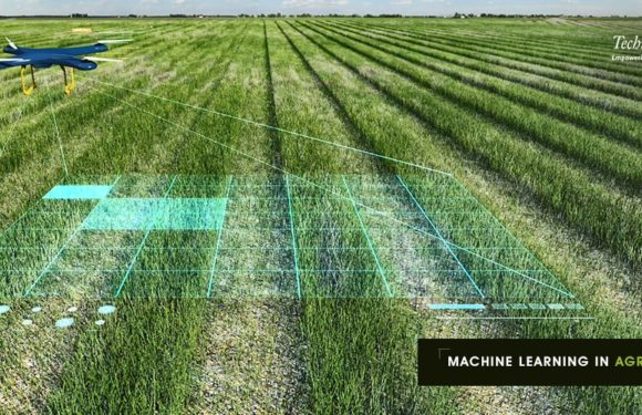 Machine Learning in Agriculture: Applications and Techniques