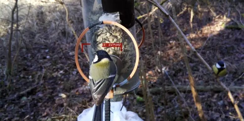 Birdwatching AI can recognise individual birds from behind