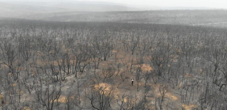 AI helps protect Australian wildlife in fire-affected areas