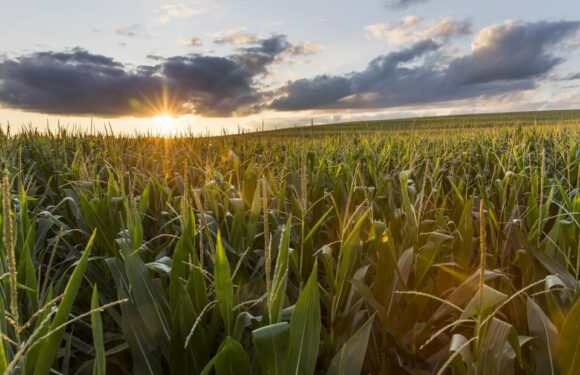 Artificial Intelligence And Precision Farming: The Dawn Of The Next Agricultural Revolution