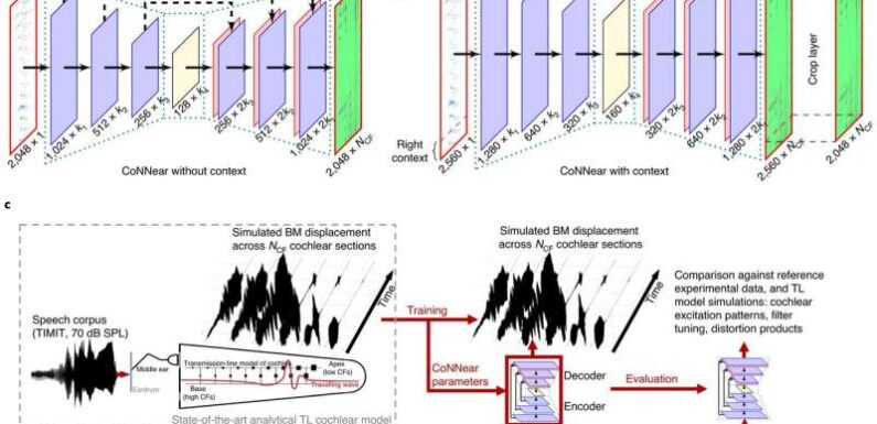 Combining convolutional neural network with computational neuroscience to simulate cochlear mechanics