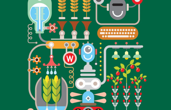 Using artificial intelligence for the automation of agricultural processes
