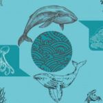 Talking to Animals Using AI to Decode the Language of Whales