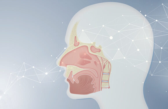 Artificial networks learn to smell like the brain