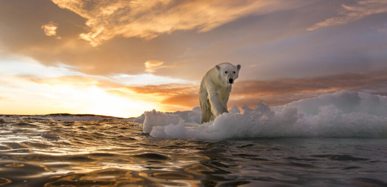 Artificial intelligence may be set to reveal climate-change tipping points